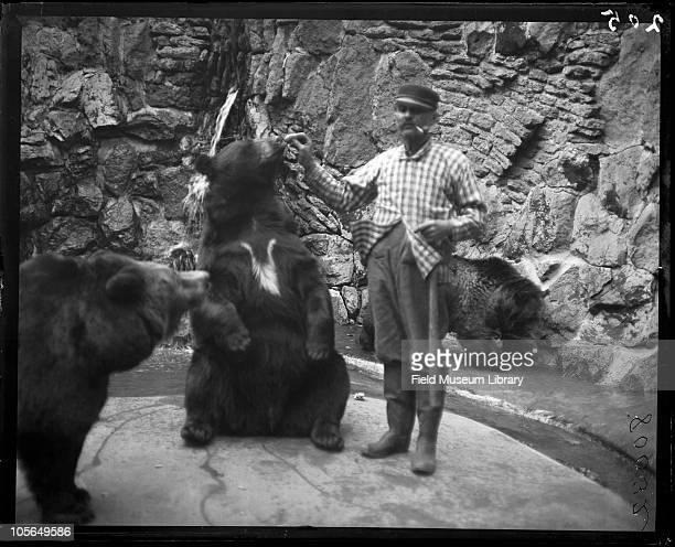 Man a zookeeper in checked jacket hat with pipe in his mouth feeding bears Lincoln Park Zoo Chicago Illinois 1900