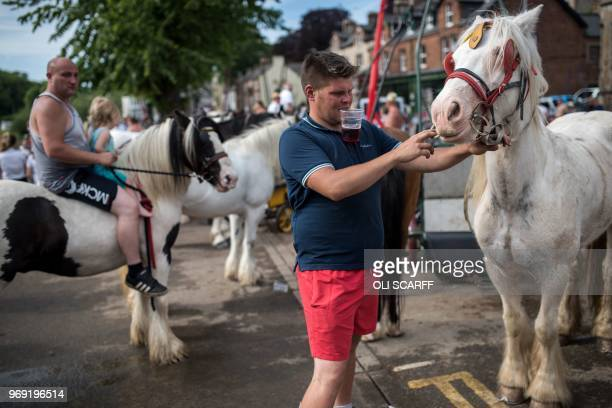 A man adjusts a horse's tack in the centre of ApplebyinWestmorland on the opening day of the annual Appleby Horse Fair in the town of...