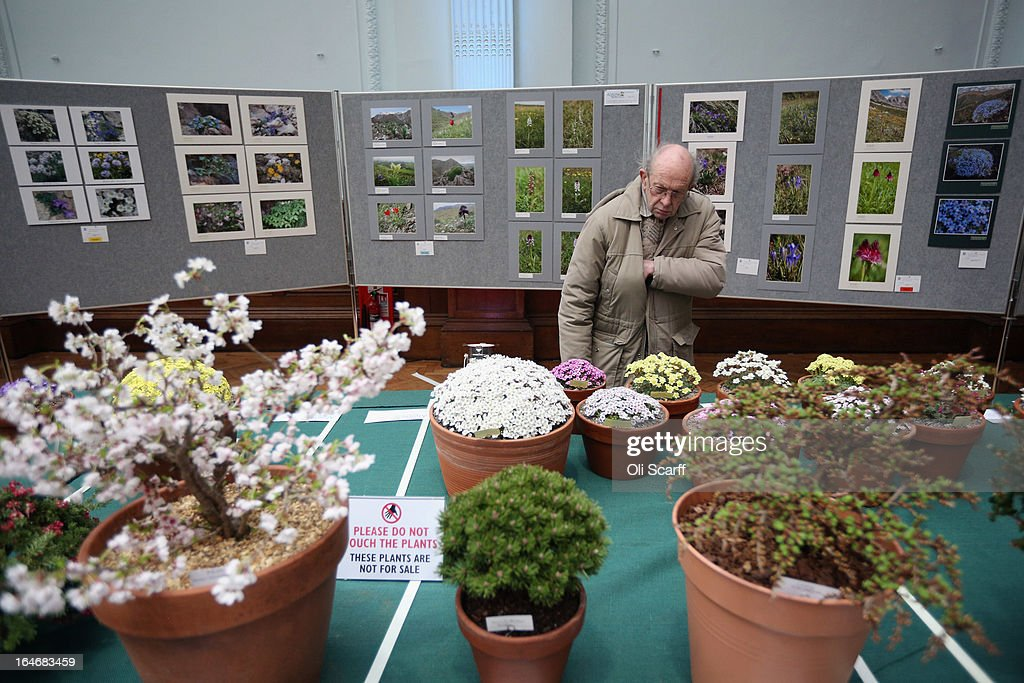 A man admires the plants on display at the RHS Great London Plant Fair on March 26, 2013 in London, England. The fair takes place in the RHS Horticultural Halls on March 26-27, 2013 and features numerous botanical displays, advice from the RHS, Alpine Garden Society stalls and the results of the 'Early Daffodil and Hyacinth Competition'.