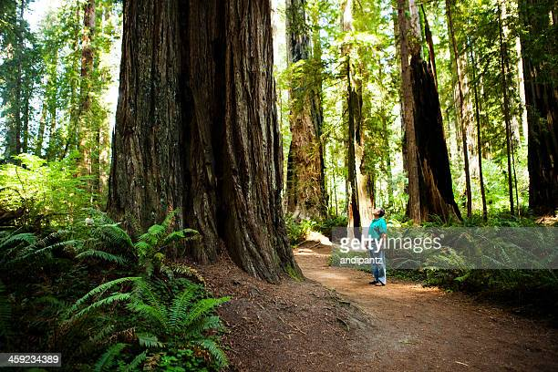 Man admiring the redwood trees