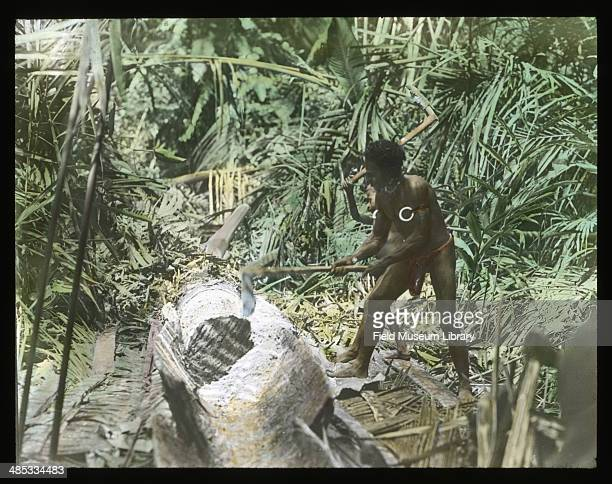 A man and a boy break out sago by pounding out the sago pith Sissano North Coast Sissano Papua New Guinea November 1 1909 The outer portion of the...