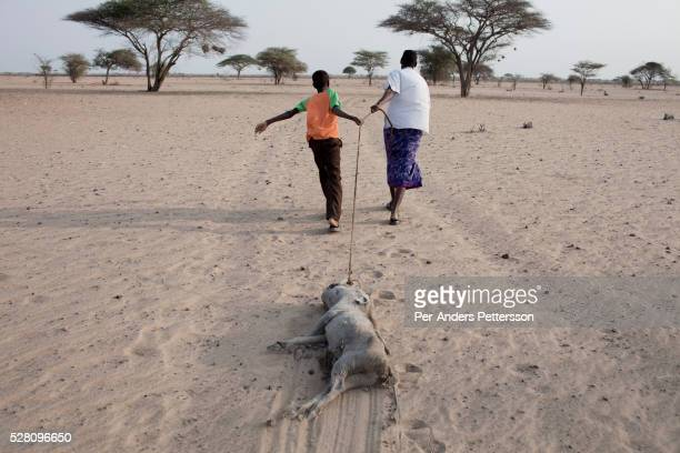 A man and a boy pulls a warthog carcass in a barren area on July 4 2011 in Dilmanyale Kenya Two successive poor rains entrenched poverty and lack of...