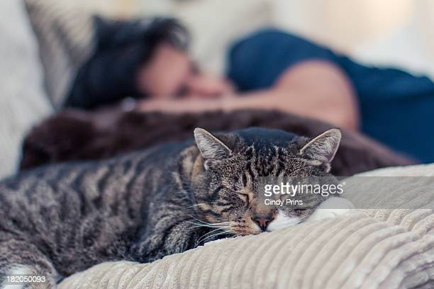 man and a cat taking a nap on the couch - tierkörper stock-fotos und bilder