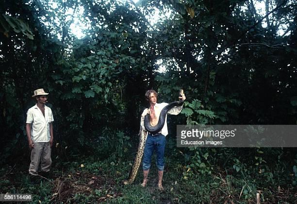 Man and anaconda Colombian Amazon Eunectes Murinus