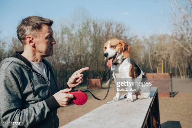 man and beagle - pet leash stock pictures, royalty-free photos & images