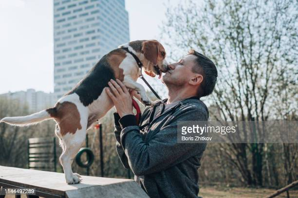 man and beagle - feet lick stock pictures, royalty-free photos & images