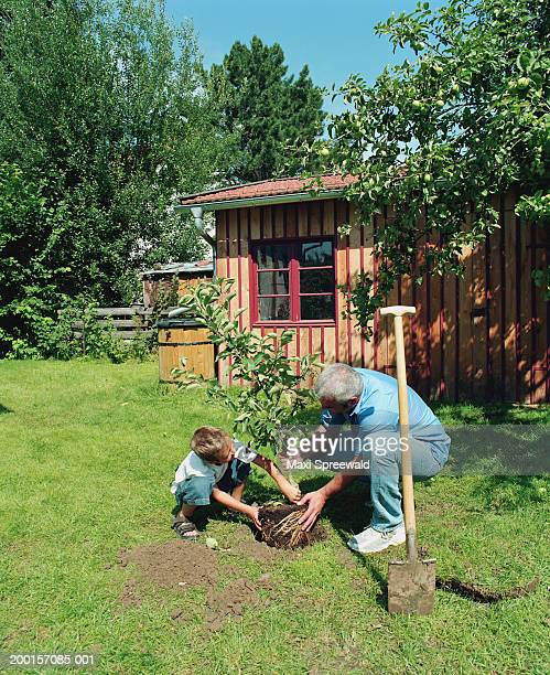 Man and boy (6-8) planting tree in garden