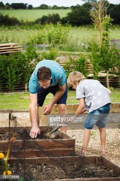 man and boy standing at a plant bed in a garden, boy holding a spade. - mint plant family fotografías e imágenes de stock