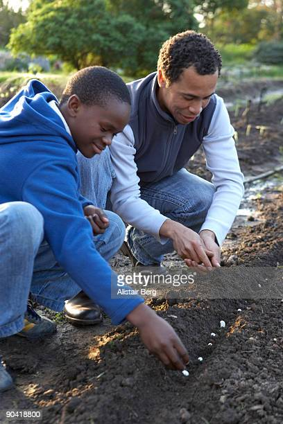 Man and boy working in a vegetable garden