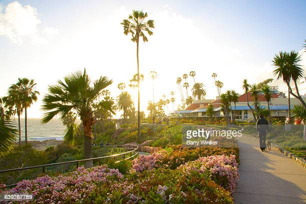 man and dog amid plantings, laguna beach - laguna beach california stock pictures, royalty-free photos & images