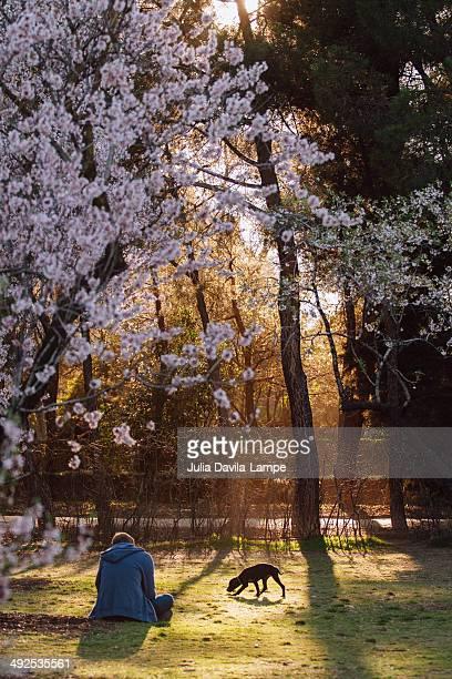 man and dog in spring - almendro fotografías e imágenes de stock
