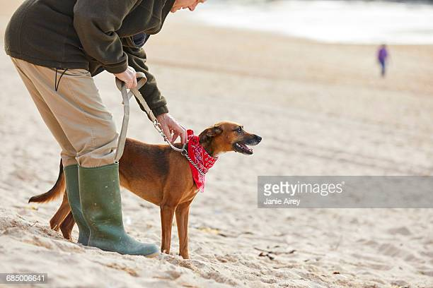 man and dog on beach, constantine bay, cornwall, uk - releasing stock photos and pictures