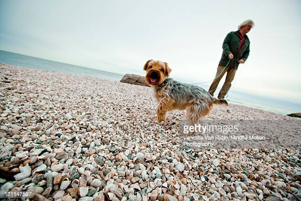 man and dog on beach - vanessa van ryzin stockfoto's en -beelden