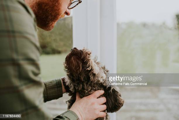 man and dog - affectionate stock pictures, royalty-free photos & images