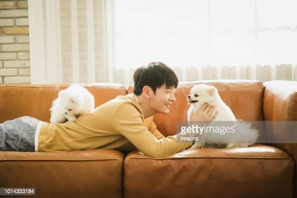 man and dogs lying flat on the sofa - 腹ばい ストックフォトと画像