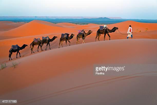 Mann und Dromedary Kamelen zu Fuß in Marokko Desert