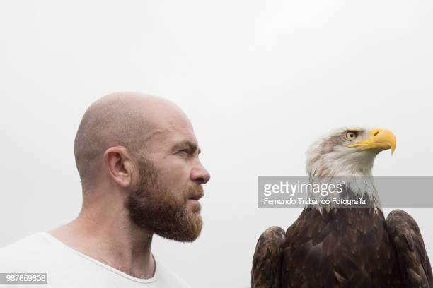 man and eagle - tierkopf stock-fotos und bilder
