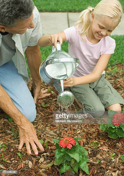 man and girl watering flowers - mulch stock pictures, royalty-free photos & images