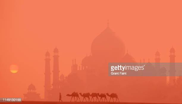 composite image man leading five camels