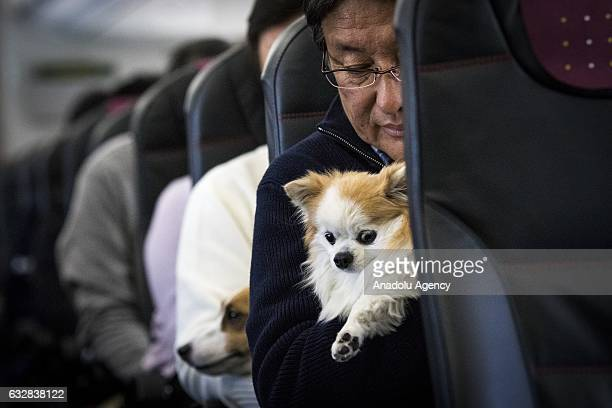A man and his dog are seen in a plane in Chiba Japan on January 27 2017 Japan Airlines 'wan wan jet tour' allows owners and their dogs to travel...