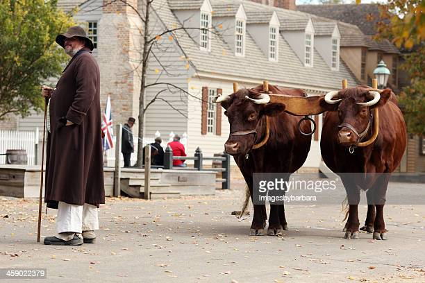 man and his oxen - yoke stock photos and pictures