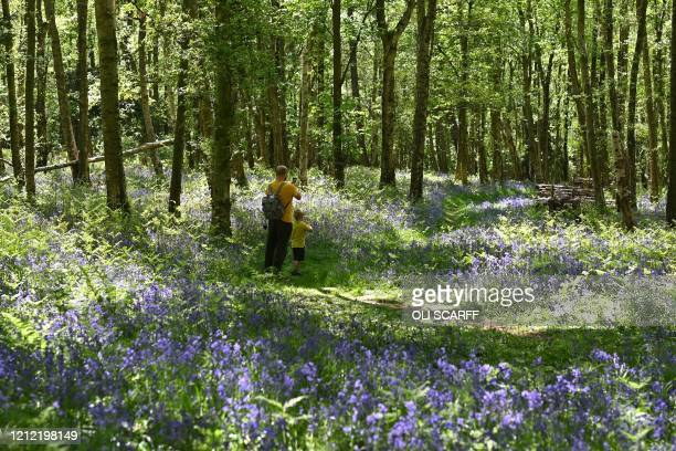 Man and his son take photographs of bluebells in a wood near to Pateley Bridge in northern England on May 8 as they enjoy the warm weather on the...