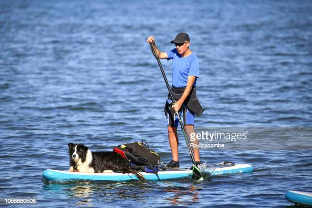 man and his trusty collie dog on a paddleboard, paddling past brownsea island - english channel stock photos and pictures