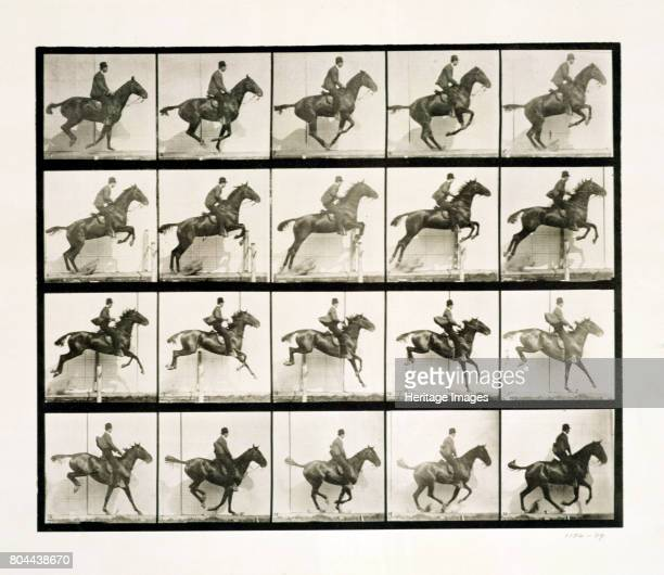 Man and horse jumping a fence 1887 Eadweard J Muybridge was the first photographer to carry out the analysis of movement by sequence photography an...