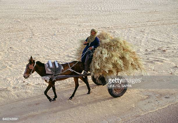 A man and horse transporting dried herbs between Touggourt and El Oued Algeria
