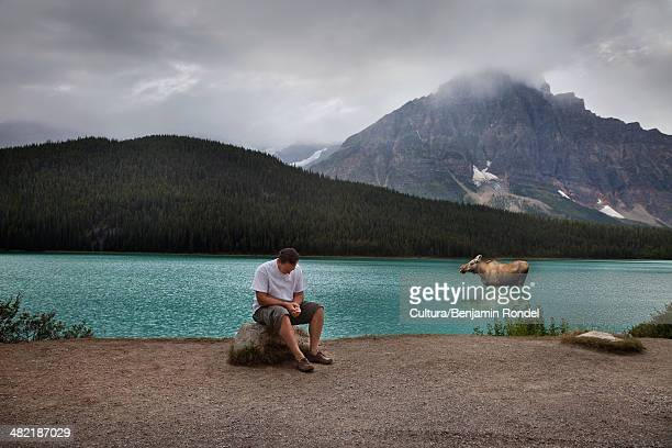 Man and moose in Banff National Park, Alberta, Canada