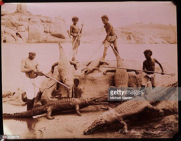 Man and three boys wielding poles and a gun amid a group of hungry crocodiles, circa 1870-1890.