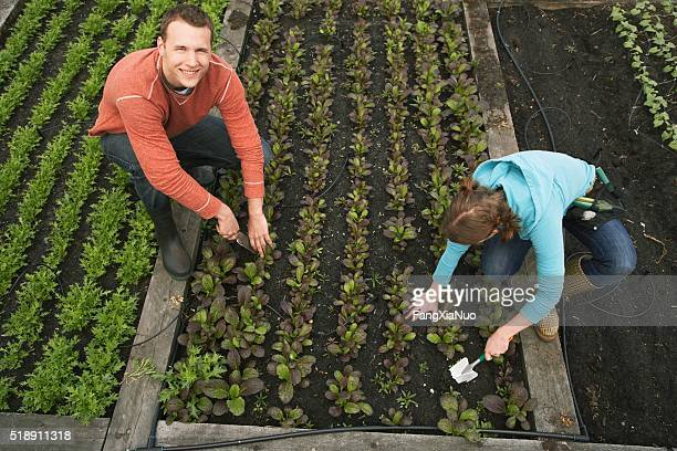 Man and woman gardening