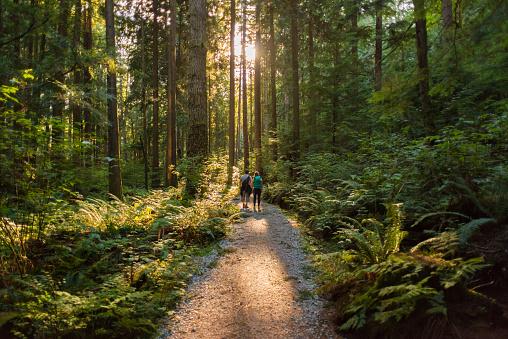 Man and Woman Hikers Admiring Sunbeams Streaming Through Trees 892002220