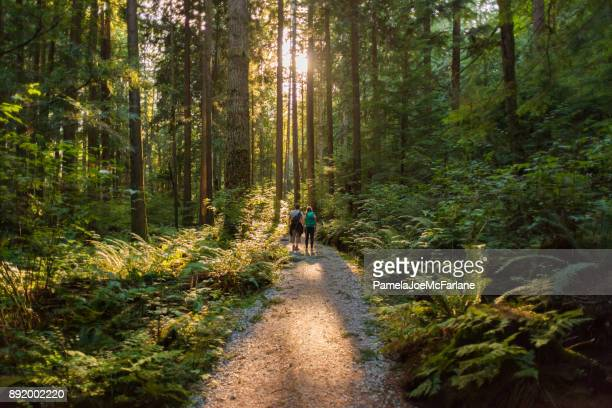 man and woman hikers admiring sunbeams streaming through trees - ao ar livre imagens e fotografias de stock