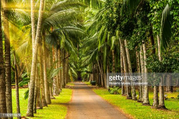 man and woman in love walking among palm trees, mauritius island - love island stock pictures, royalty-free photos & images