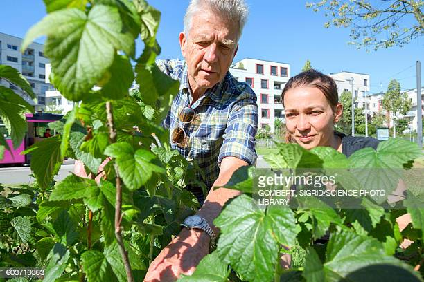 man and woman inspecting plants - sigrid gombert stockfoto's en -beelden