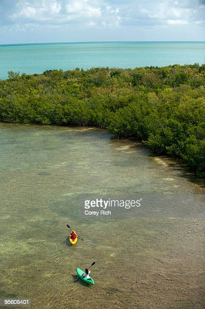 a man and woman kayak in florida. - mangrove tree stock pictures, royalty-free photos & images