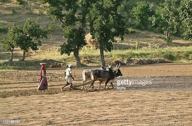 Homem e mulher Lavoura e semear o campo, Rajastão, Índia