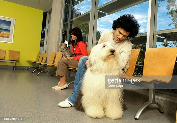 man and woman sitting in vets waiting room with pet dogs - old english sheepdog stock pictures, royalty-free photos & images