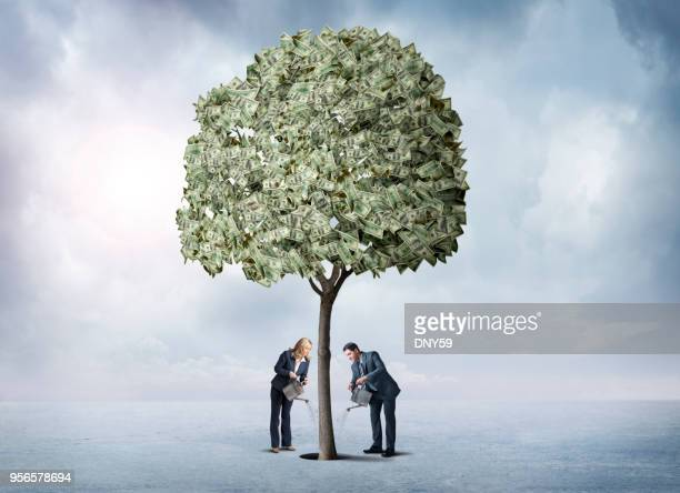 man and woman watering their money tree - money tree stock photos and pictures