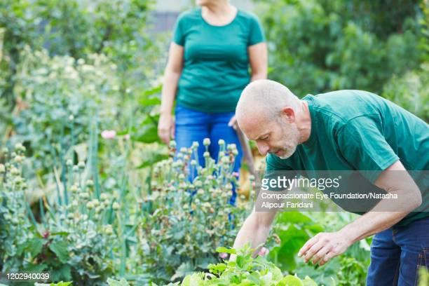 man and woman working in community garden - compassionate eye foundation stock pictures, royalty-free photos & images