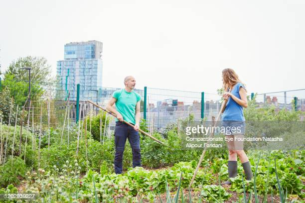 man and woman working together in community garden - urban garden stock pictures, royalty-free photos & images