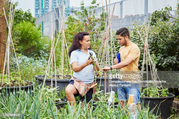 man and woman working together in community garden - compassionate eye foundation stock pictures, royalty-free photos & images