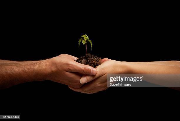 Homme et Femme mains tenant des semis d'érable au sol