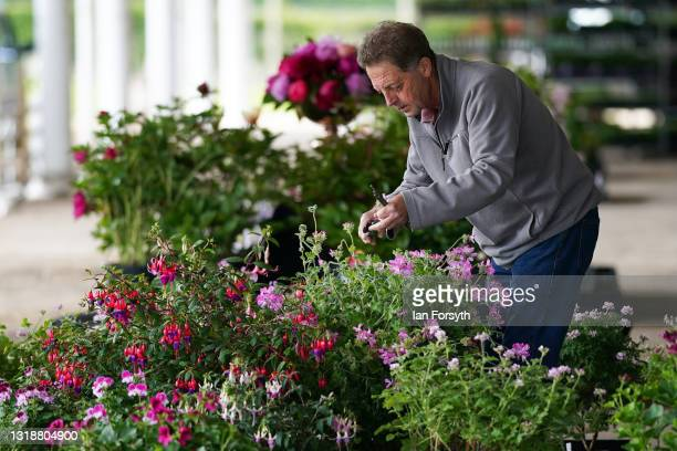 Man arranges his display as final preparations are made during staging day ahead of the Spring Essentials Flower Show on May 19, 2021 in Harrogate,...
