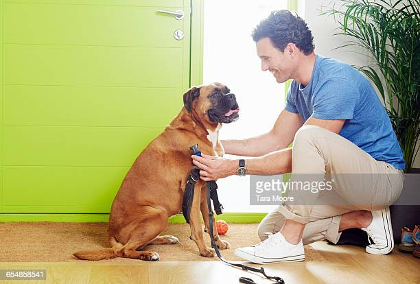 man at door putting leash on dog to go for walk - obedience training stock pictures, royalty-free photos & images