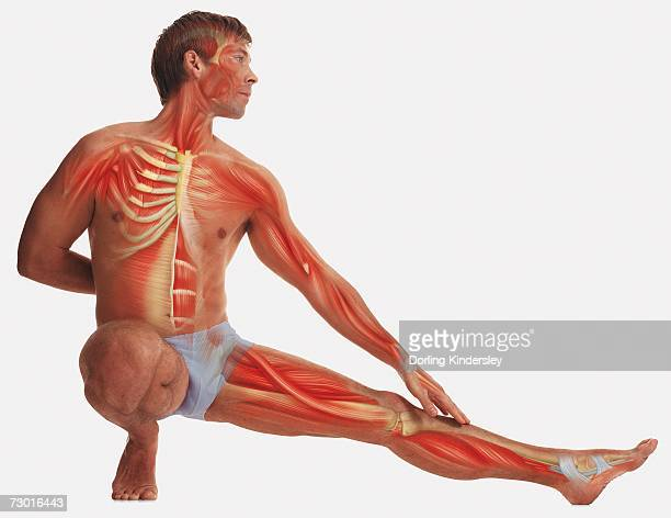 Man balancing on one foot, kneeling, other foot stretched out, hand behind back, other hand touching outstretched leg, illustration of his muscles and skeleton overlaid on body.