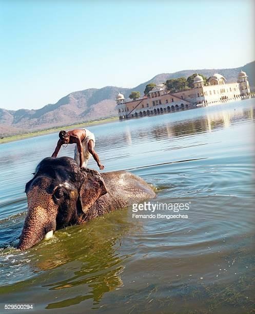 Man Bathing Elephant in Lake