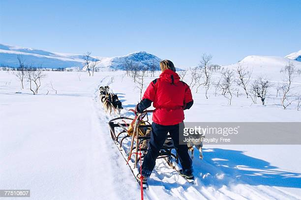 man behind a dog sledge saltoluokta lappland sweden. - swedish lapland stock photos and pictures