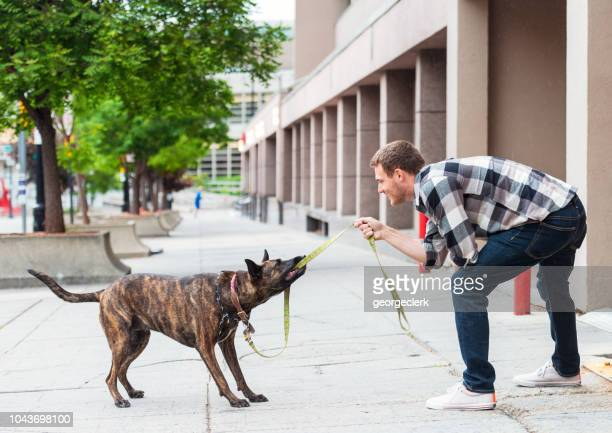 man bonding with his rescue dog - dog fight stock pictures, royalty-free photos & images